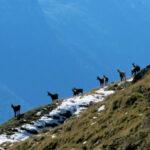 Aichenegg Alpe